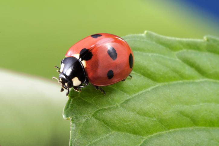 Lady-Bug.jpeg
